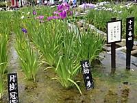 Horikirinoyume_2